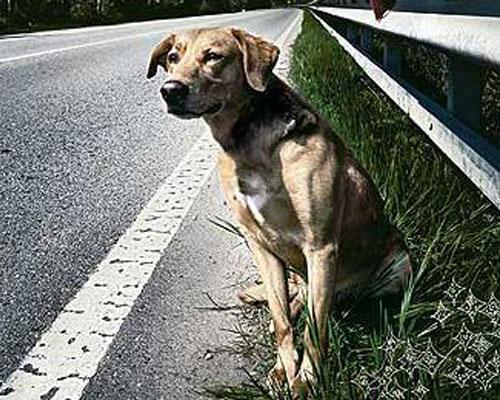 Monza For Animals, il concerto per i diritti degli animali
