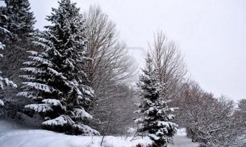 Natale da Energiadi: una Foresta Incantata a Palazzo Marino