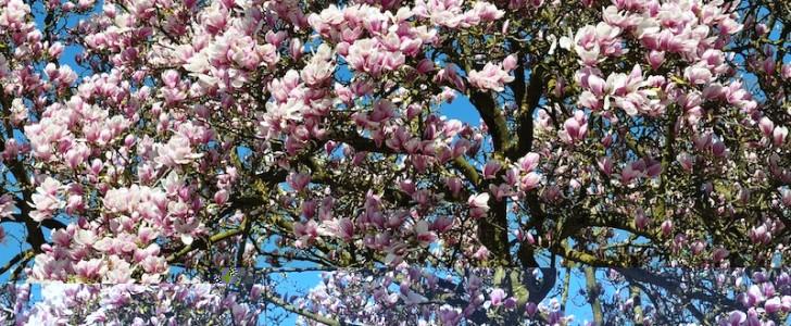Cosa FAI a Milano sabato 21 marzo 2015? Festeggi la primavera! Giornate FAI, mercatini e festa in stile anni '50!