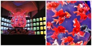 Art Aquarium: un evento unico al mondo, a Milano per Expo 2015 al Circolo Filologici di via Clerici
