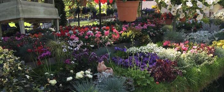 Salviamo il Vivaio Riva: giovedì 25 maggio 2016, Milano si batte per conservare il giardino magico delle Colonne di San Lorenzo