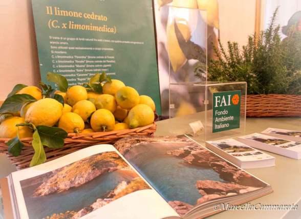 Grande fiera agrumi alla palazzina appiani aprile a milano for Calendario concimazione agrumi