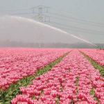 Giardini Milano: i 5 più belli da scoprire rivelano storie straordinarie
