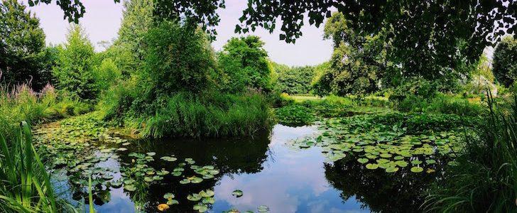 L'Orto Botanico Città Studi in apertura straordinaria, ecco quando!